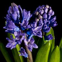 ya viene marzo con flores ... von helmut krauß