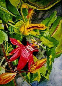 Passion flower von Marie Luise Strohmenger