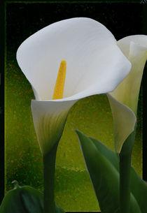 Tropische Schönheit von Marie Luise Strohmenger