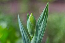 Gwowing Flower