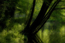 trees over river by ben seelt