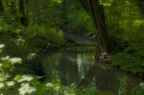 brook forest D by ben seelt