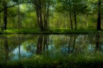 brook forest B by ben seelt