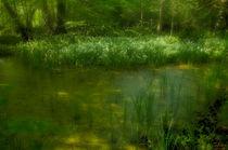 swamp flowers by ben seelt
