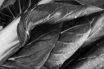 Gemüse 3 von Lisa Assimont