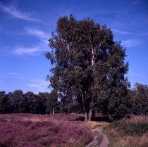 wo gibt ́s  hier bloss einen schattenplatz? by helmut krauß