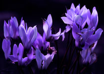 Purple Beauty in a Moonlight.Photography. by Larisa Kroshkin