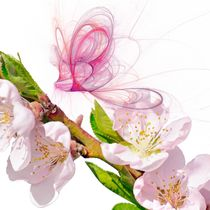 Blossom-and-spirits-unbodered