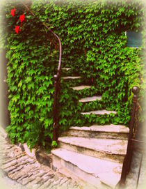 Vine Laden Steps by Lainie Wrightson