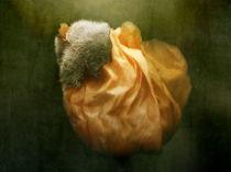 Mohn mit Hut von Franziska Rullert