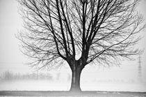 Tree in a cold morning von Claudio Nozza Art