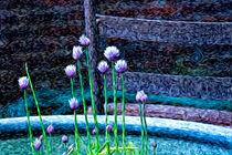 Garlic Blooms von Jon Mack