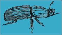 Beetle by Navjinder Kainthrai