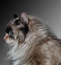 Kathycat