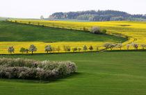 Die Landschaft blüht von Wolfgang Dufner