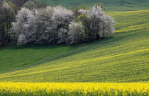 Frühlingsfelder by Wolfgang Dufner