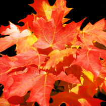 Colorful Fall Leaves by Mary Lane