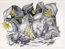 Pups-and-daisies