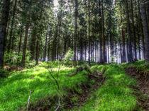 strahlender Wald von hannes-bielefeldt