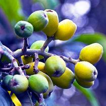 SICILIAN FRUITS  by captainsilva