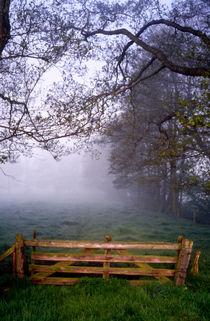 hinterm weidetor: nebel von helmut krauß