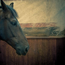 Portrait of a Horse by Lars Hallstrom