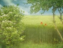 summertime von Franziska Rullert