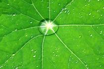 Rain-drop-junsion