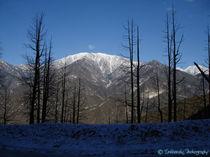 Mt. Baldy by Paul Kemp