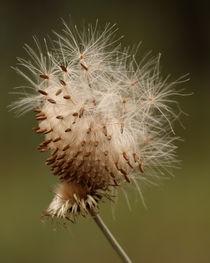 """Odd Ball"" (Thistle Seed) von Howard Cheek"