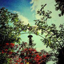 Rosegarden by Ursula Wolfangel-Hoppmann