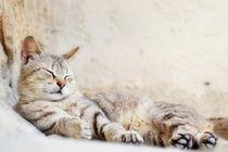 Ruhende Katze by sandarine