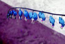 Herzblume von tinadefortunata