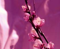 Blüten von tinadefortunata