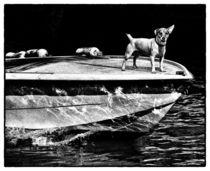 Hund auf Vorbeifahrt von Matthias Töpfer