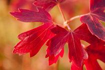Spirit-of-autumn-by-lotusaqua-d4dor44