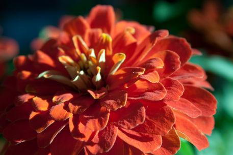 Sunday-bloom-by-lotusaqua-d4f59ne