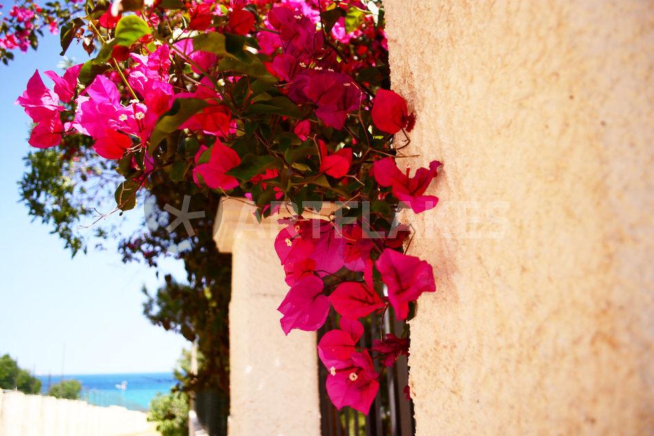 mediterrane farben fotografie als poster und kunstdruck von sandarine bestellen artflakes com. Black Bedroom Furniture Sets. Home Design Ideas