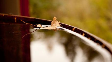Spirit-of-the-autumn-by-lotusaqua-d4cw8o9
