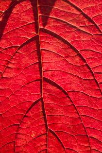 Red-dessert-by-lotusaqua-d4debw1