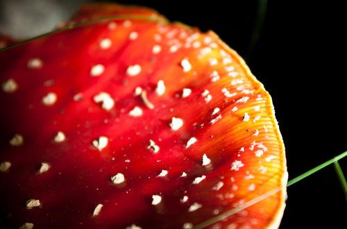 Amanita-muscaria-by-lotusaqua-d4cp6rp