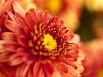 Autumn Mum by Shannon Workman