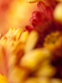 Botanical-093811