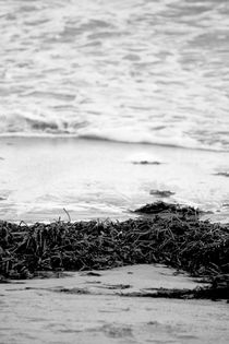 Seaweed Black and White by Bianca Baker