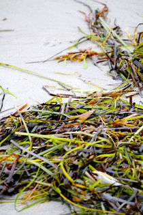 Seaweed, Atlantic Ocean by Bianca Baker