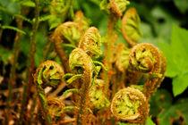 Ferns by Bianca Baker