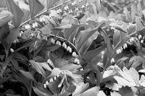 Botanical Gardens Black & White by Bianca Baker