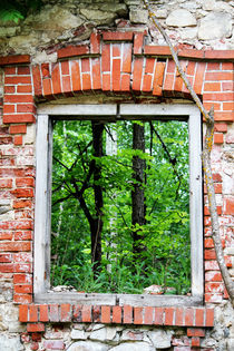 Green Window von Bianca Baker