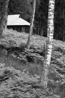Latvian Forest von Bianca Baker