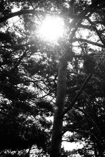 Usedom Light von Bianca Baker
